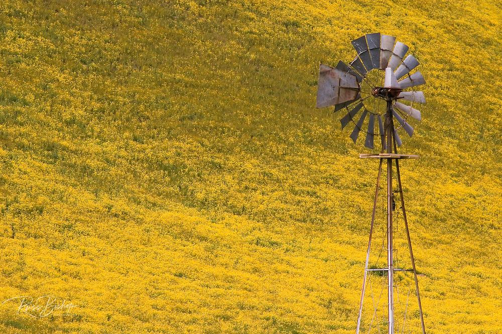 Old windmill against hillside covered in Goldfields, Temblor Range, Carrizo Plain National Monument, California USA