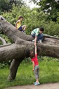 Three friends (7-9) climbing on fallen tree