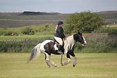 Class 24 - Ridden Pony