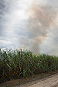 Control burn in sugar cane fields; New Roads, Louisiana