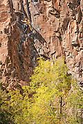 "Writer, editor, and climber Alison Osius climbing ""Feline"" 5.11 at Rifle Mountain Park in Colorado."