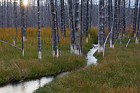 Stream winding through a previously burned forest near Firehole Lake Drive in Yellowstone National Park, Wyoming