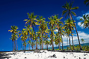 Coconut palms at Pu'uhonua O Honaunau National Historic Park (City of Refuge), Kona Coast, Hawaii USA