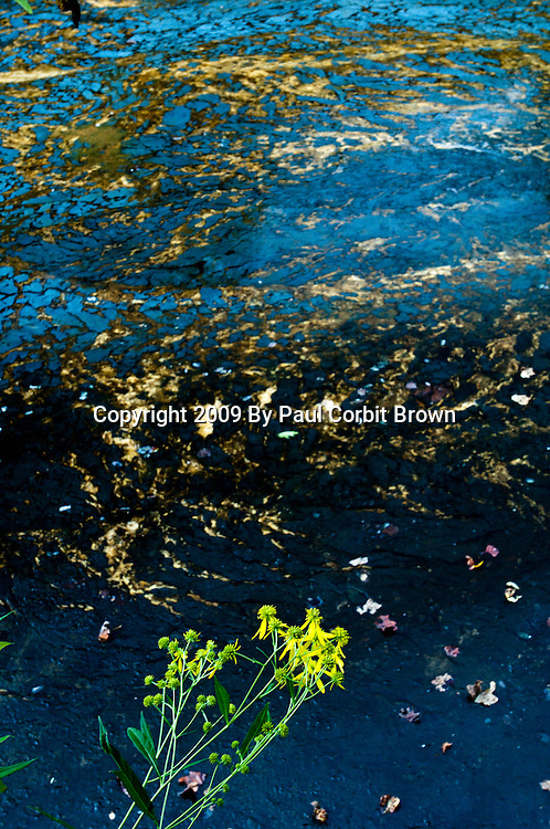 A fragile piece of life clings to the edge of a toxic settlement pond in Prenter, WV.  Residents of Prenter have had their well water contaminated by nearby mining and many are in perilous health as a result.