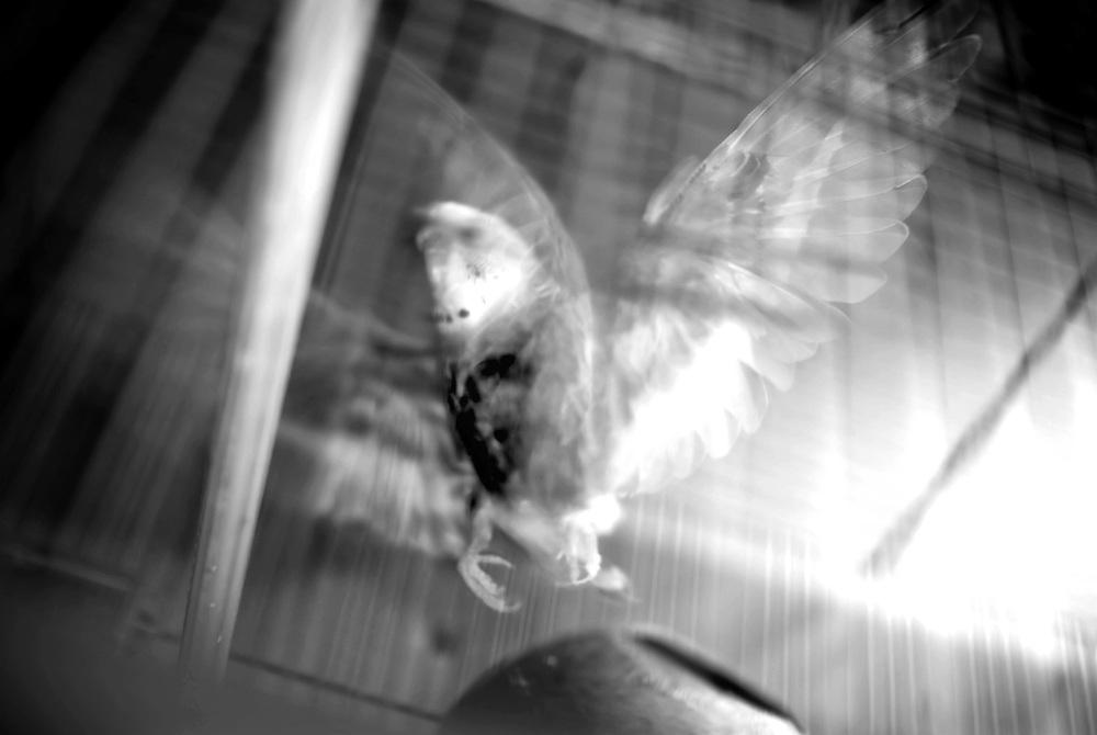 """APUNTES SOBRE MI VIDA: LA PASTORA I - 2009/10<br /> Photography by Aaron Sosa<br /> """"Periquito Australiano"""" en casa de mi Mama """"Abuela Paterna"""", Carmen Cecilia Rojas.<br /> La Pastora, Caracas - Venezuela 2009<br /> (Copyright © Aaron Sosa)"""