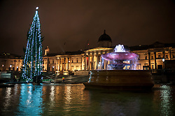 © Licensed to London News Pictures. 03/12/2015. London, UK. The newly lit Christmas tree in Trafalgar Square is seen in the rain.  The tree, a Norwegian spruce, is donated by the City of Oslo to the people of London each year as a token of gratitude for Britain's support during the Second World War. Photo credit : Stephen Chung/LNP