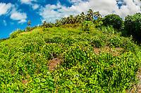 Yam Fields, Weneki (Anep), island of Ouvea, Loyalty Islands, New Caledonia