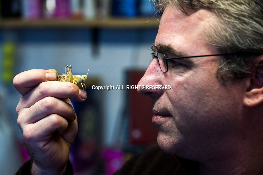 Lucens, février 2018. Ayer GRIFARM père et fils habitent à Lucens dans le canton de Vaud. Eleveurs d'insectes pour nourrir d'autres espèces. Exploitation dans leur cave. © Olivier Vogelsang