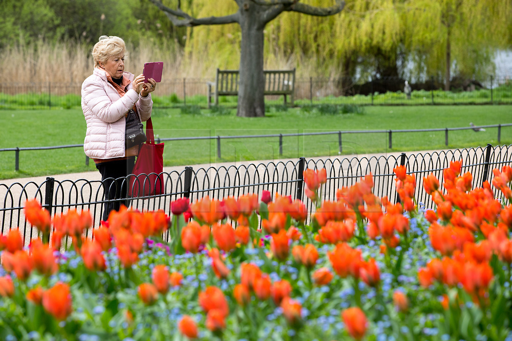 © Licensed to London News Pictures. 16/04/2018. London, UK. A woman takes photos of brightly coloured flowers in the sunshine as the UK is set to experience warm weather of up to 25 degrees celsius this week. Photo credit : Tom Nicholson/LNP