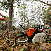 Thomas Wells | BUY AT PHOTOS.DJOURNAL.COM<br /> Michael Palmer makes the final to get a tree to begin to fall during a chainsaw certification class on West Jackson Street in Tupelo. The class is used so Eight Days of Hope can have more certified users to help with diaster relief.