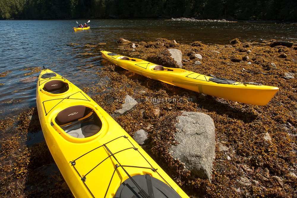 Two yellow sea kayaks on a seaweed covered beach in BC.