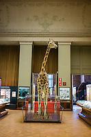 AFrica Museum Tervuren Giraffe in originele museumruimte