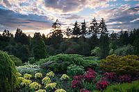 Queen Elizabeth Park at Sunset, Vancouver, B.C.