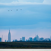 September 9, 2012 - Queens, NY : Stretching across more than 9,000 acres, Jamaica Bay Wildlife Refuge --part of the Gateway National Recreation Area -- contains fresh and salt water habitats teeming with wildlife. The 1.5-mile West Pond Trail provides a good vantage point for bird watching and boasts a picturesque view of the Manhattan skyline (pictured here). CREDIT: Karsten Moran for The New York Times