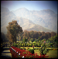 Landscape in the famed Neshat garden which dates to the Mughal era.