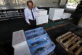 Tsukiji wholesale fish market, after hours, Tokyo