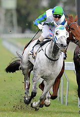 Hastings-Racing, Makfi Challenge Stakes