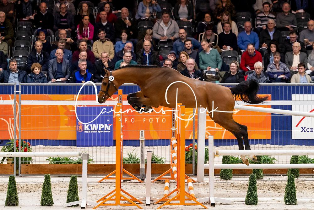 062, Quornet STN<br /> KWPN Hengstenkeuring - 's Hertogenbosch 2019<br /> © Hippo Foto - Dirk Caremans<br /> 30/01/2019