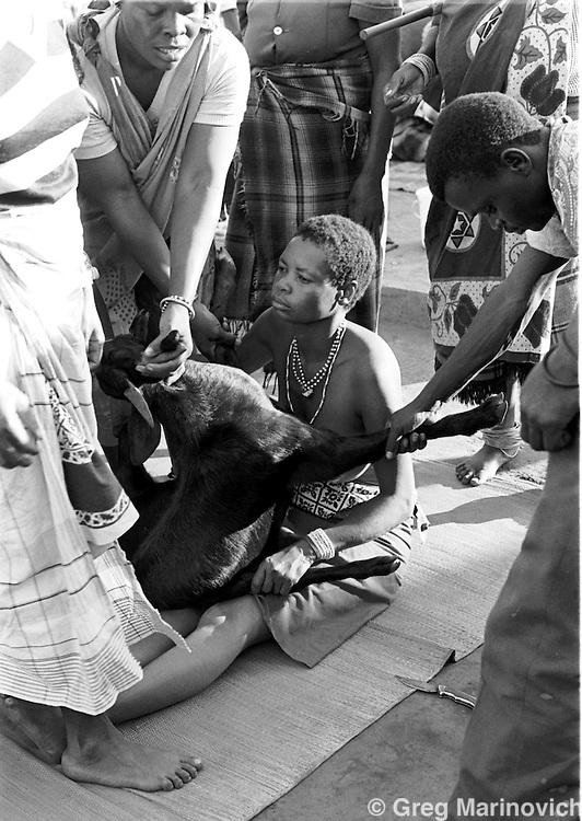 A sacrificial goat is presented to Sowetan Cookie Kashane at her initiation as Ndau medium / diviner at Dolly Village, Venda, South Africa Feb 4, 1991. (Greg Marinovich)