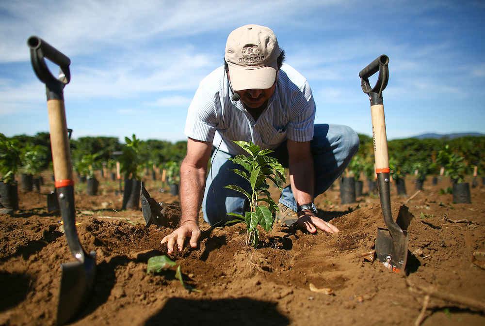 Hacienda Alsacia farm manager Victor Trejos plants a tree during the 2016 Starbucks Origin Experience for Partners. Photographed in January 2016. (Joshua Trujillo, Starbucks)<br /> <br /> ***model released***