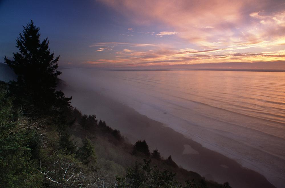 USA, California, Redwoods coast