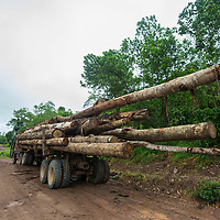 Logs mounted on the back of lorry, Imbak Canyon Conservation Area, Sabah, Malaysia, Borneo, South East Asia.