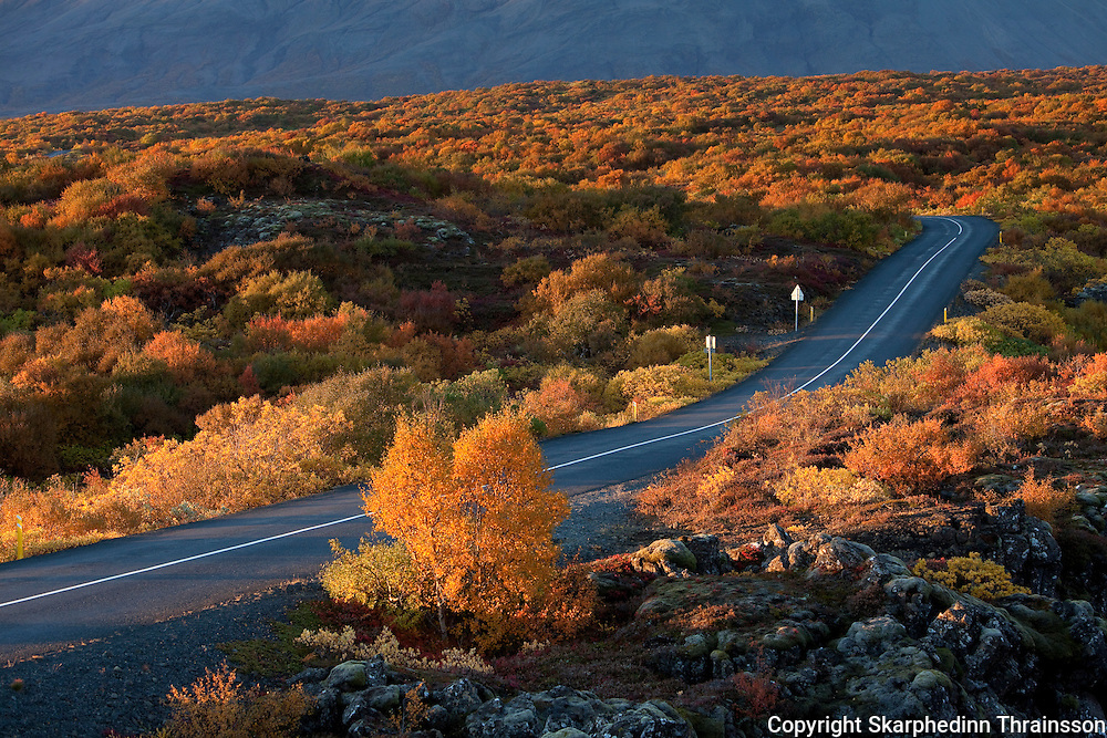 Autumn road to Þingvellir