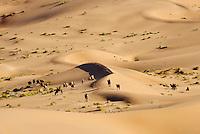 Chine, région autonome de Mongolie intérieure, désert de Badain Jaran, désert de Gobi, chameau de Bactriane // China, Inner Mongolia, Badain Jaran desert, Gobi desert, bactriane camels