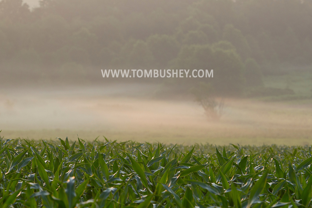 Middletown, New York - Early morning fog covers part of a farm field on July 22, 2014..