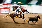 "01 SEPTEMBER 2011 - ST. PAUL, MN: A breakaway roper chases a calf in the high school rodeo at the Minnesota State Fair.  The Minnesota State Fair is one of the largest state fairs in the United States. It's called ""the Great Minnesota Get Together"" and includes numerous agricultural exhibits, a vast midway with rides and games, horse shows and rodeos. Nearly two million people a year visit the fair, which is located in St. Paul.   PHOTO BY JACK KURTZ"