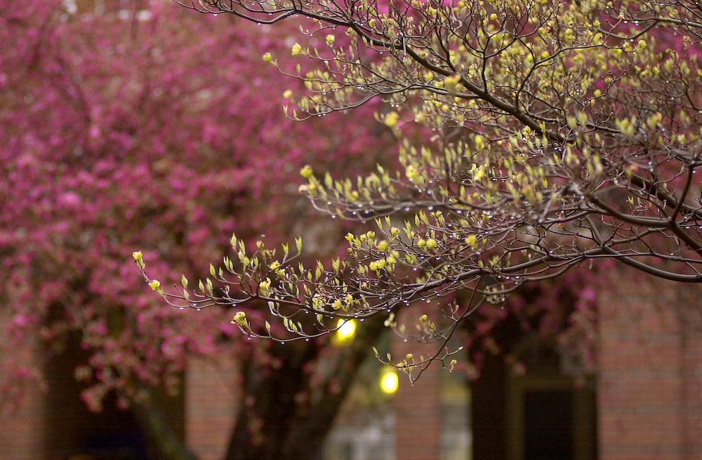 16390Spring Campus Shots