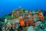 Coral reefs in Palm Beach County, Florida, United States are some of the richest in North America, home to hundreds of varieities of fish, sea turtles and marine mammals