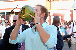 Prince Harry drinks from a coconut whilst attending a St Lucian street festival in Soufriere on the island of St Lucia during the second leg of his Caribbean tour.