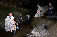 Photographers and local experts looking for amphibian and reptile in aqueduct at night, Lantau Island, Hong Kong, China. 摄影师与专家夜间寻找两栖爬行动物,大屿山,中国香港。