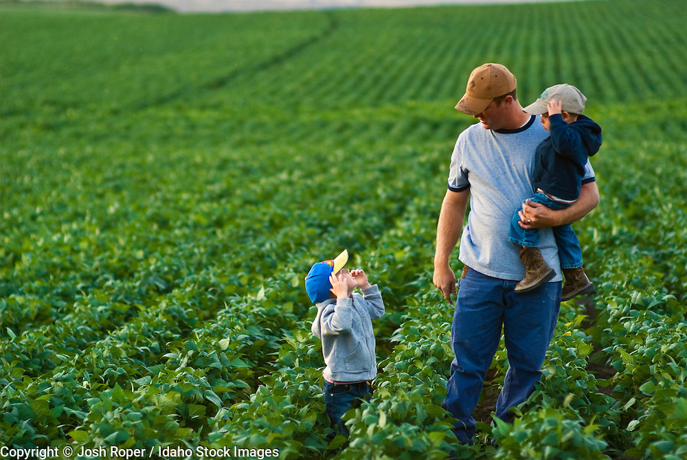 Idaho, Gooding. A beautiful green field of soybeans on a summer morning with a farmer and his children walking through the crop.