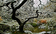 Ice covers a tree and many other things on a winter's day about the Japanese Garden in Portland, Oregon.