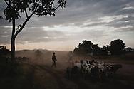 Monduli Juu - Young Maasai boy tending a goat herd.