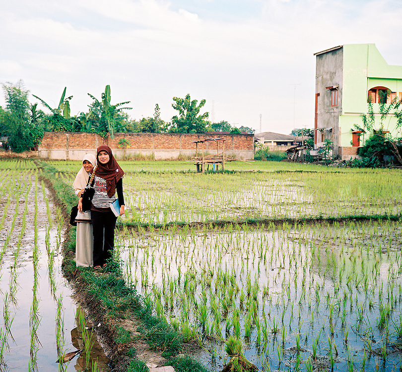 Two Indonesian women on the way to university cross an urban rice paddy.<br /> Medan, Sumatra, Indonesia