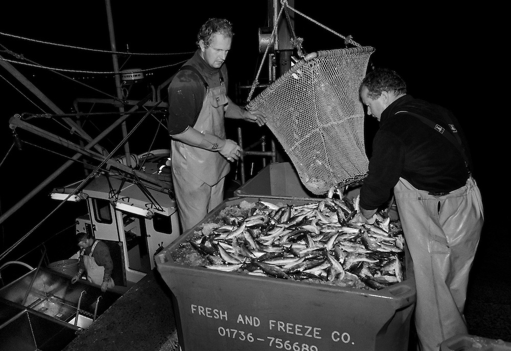 Crew of the 'Pride of Cornwall' landing a catch of sardines in Newlyn harbour, after a night's fishing. <br /> <br /> The fishermen use a method known as purse or ring netting for catching sardines, and is similar to the seine netting used when pilchards were the mainstay of the fishing industry in Cornwall, the sardine being an immature pilchard. <br /> <br /> This is an environmentally friendly way of fishing as only one species is targeted and so there is rarely any unwanted fish caught. <br /> <br /> Fishing for sardines is best in the winter months and as stocks are plentiful in this part of the country they are unaffected by quotas. <br /> <br /> The benefits of eating this kind of fish have been widely publicised in promoting good health and so the potential for expanding the market is significant.