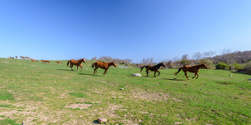 Horses, Ranch, Montauk, Long Island, NY
