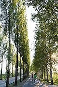 Allee mit Straße und Radweg zur Insel Reichenau, Bodensee, Baden-Württemberg, Deutschland