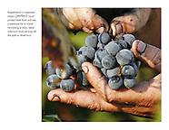 MPW.60: Saving Grapes