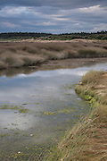 At low tide, the edges of Invercargill Estuary make great feeding areas for birds.  Southland, New Zealand.