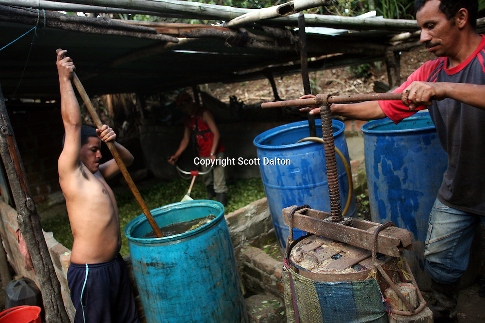 A coca lab in full swing; one worker cuts the coca leaf with a machine (background), while another worker mixes a barrel full of coca leaf and gasoline (left) and yet another man squeezes out the liquid product left over to separate it from the now used coca leaf (right), in a remote area of the southern Colombian state of Nariño, on Monday, June 25, 2007. (Photo/Scott Dalton)