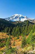 Mount Rainier viewed from Paradise Valley.  Photographed along Paradise Valley Road in Mount Rainier National Park, Washington State, USA