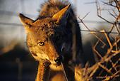 Small Mammal Stock Photos
