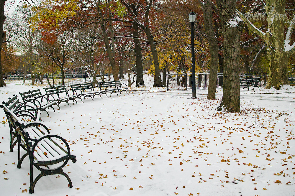 Benches in snowy  Park