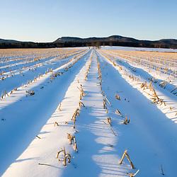 Early morning on a farm in Hadley, Massachusetts.  Winter.  Holyoke Range.