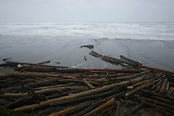 Driftwood at Kalaloch Beach, Kalaloch, Olympic National Park, Washington, US