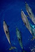 Dolphin<br />